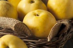 Сырцовые органические желтые груши Яблока азиата Стоковая Фотография
