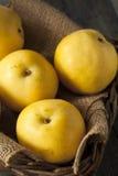 Сырцовые органические желтые груши Яблока азиата Стоковое Изображение RF