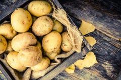 Сырцовые органические картошки Стоковые Изображения