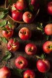 Сырцовые органические красные торжественные яблоки Стоковые Фотографии RF