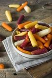 Сырцовые органические моркови младенца радуги Стоковые Изображения RF