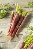 Сырцовые органические моркови пурпура Heirloom стоковое изображение rf