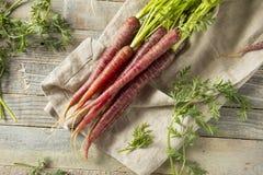 Сырцовые органические моркови пурпура Heirloom стоковое изображение