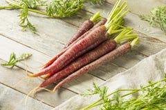 Сырцовые органические моркови пурпура Heirloom стоковое фото rf