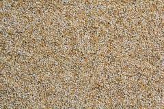 Сырцовые песчинки ячменя Стоковое Изображение
