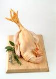 Сырцовые петух/цыпленок стоковое изображение