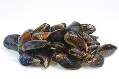 сырцовые продукты моря Стоковая Фотография RF