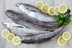 Сырцовые рыбы трески Стоковая Фотография