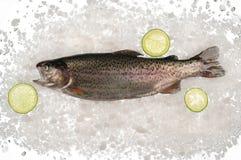 Сырцовые рыбы форели в льде стоковая фотография rf