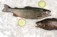 Сырцовые рыбы форели в льде стоковые изображения rf
