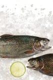 Сырцовые рыбы форели в льде Стоковое Фото