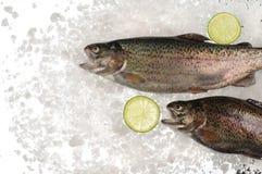 Сырцовые рыбы форели в льде стоковые изображения