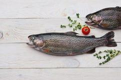 Сырцовые рыбы форели на белой доске стоковые фото