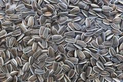 Сырцовые семена подсолнуха закрывают вверх Стоковое фото RF