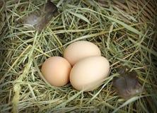 Сырцовые яичка цыпленка на сене Стоковое фото RF