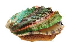 Сырцовые abalones Стоковое Фото