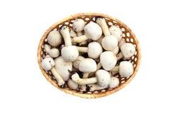 Сырцовый белый одичалый Agaricus champignons грибов в корзине Стоковая Фотография