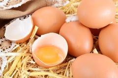 Сырцовый желтый яичный желток в сломленном eggshell стоковое фото