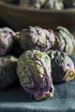 Сырцовый зеленый и фиолетовый brussel - ростки Стоковое Изображение