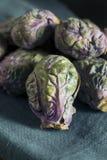 Сырцовый зеленый и фиолетовый brussel - ростки Стоковые Фото