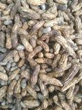 Сырцовый земной арахис Стоковые Фотографии RF