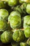 Сырцовый зеленый органический brussel - ростки Стоковая Фотография RF