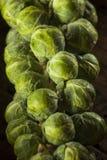 Сырцовый зеленый органический brussel - ростки Стоковые Изображения RF