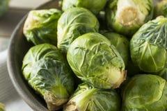Сырцовый органический зеленый brussel - ростки Стоковые Фото