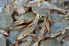 Сырцовый продукт моря Стоковые Изображения