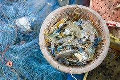 Сырцовый синий краб в корзине Стоковое Фото