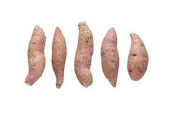 Сырцовый сладкий картофель изолированный на белой предпосылке Стоковое фото RF