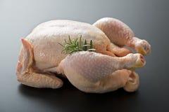 Сырцовый цыпленок Стоковое Фото