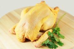 Сырцовый цыпленок Стоковое фото RF
