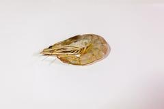 сырцовый шримс Стоковые Фотографии RF