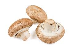 3 сырцовых общих гриба Стоковое Изображение RF