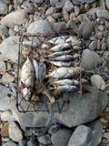 Сырые рыбы для Barbecuing Outdoors Стоковое фото RF