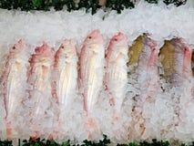 Сырые рыбы на льде аварии Стоковые Фото