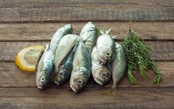 Сырые рыбы (ставрида) стоковые изображения