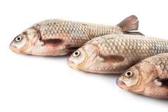 Сырые рыбы crucian Стоковые Фотографии RF