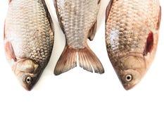 Сырые рыбы crucian Стоковые Фото