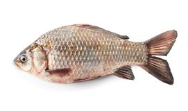 Сырые рыбы crucian Стоковое Изображение