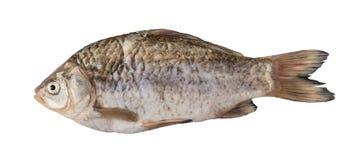 Сырые рыбы crucian Стоковая Фотография