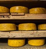 Сыр вызревания на фабрике сыра Стоковые Изображения RF