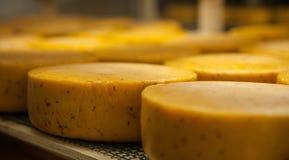 Сыр вызревания на фабрике сыра Стоковое Изображение