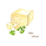 Сыр тофу акварели Стоковая Фотография RF