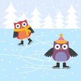 Сычи кататься на коньках льда милые Стоковые Фото