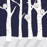 сычи снежные бесплатная иллюстрация