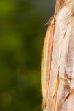 сыч гусеницы бабочки стоковая фотография rf
