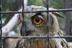 Сыч на зоопарке Стоковая Фотография RF