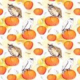 Сыч на тыкве Акварель хеллоуина повторяя картину Стоковые Изображения